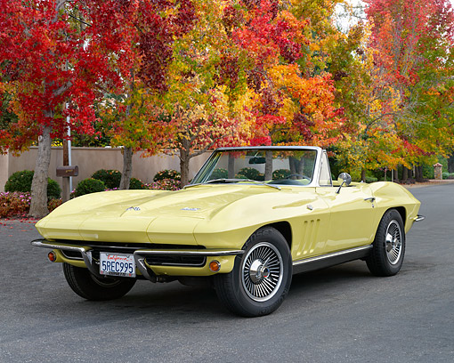AUT 22 RK3663 01 © Kimball Stock 1966 Chevrolet Corvette Roadster Convertible Sunfire Yellow 3/4 Front View By Autumn Trees