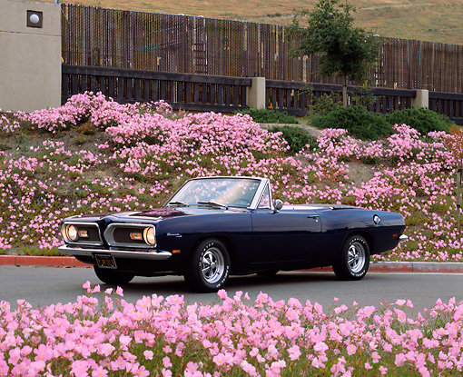 AUT 22 RK1533 03 © Kimball Stock 1969 Plymouth Barracuda Convertible Blue 3/4 Side View By Pink Flowers