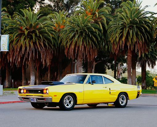 AUT 22 RK2159 03 © Kimball Stock 1969 Dodge Super Bee Yellow And Black 3/4 Side View On Pavement By Palm Tree