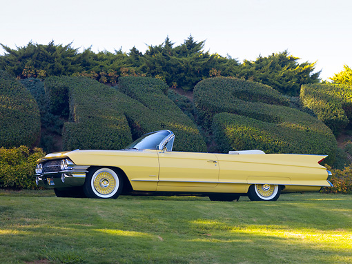 AUT 22 RK2712 01 © Kimball Stock 1961 Cadillac Series 62 Convertible Yellow 3/4 Front View On Grass By Hedge