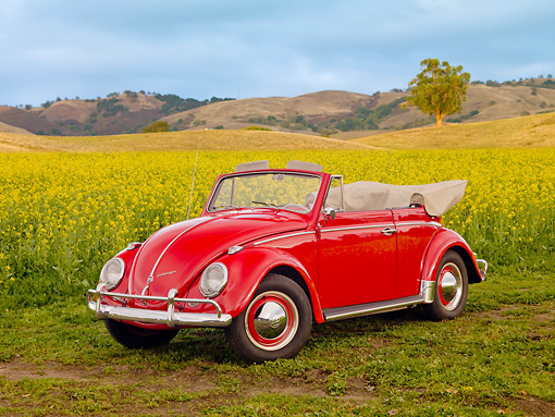 AUT 22 RK2781 01 © Kimball Stock 1962 Volkswagen Cabriolet Beetle Red 3/4 Front View By Field Of Yellow Wildflowers