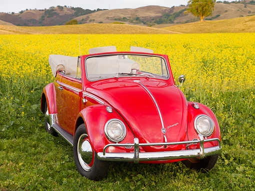 AUT 22 RK2783 01 © Kimball Stock 1962 Volkswagen Cabriolet Beetle Red 3/4 Front View By Field Of Yellow Wildflowers