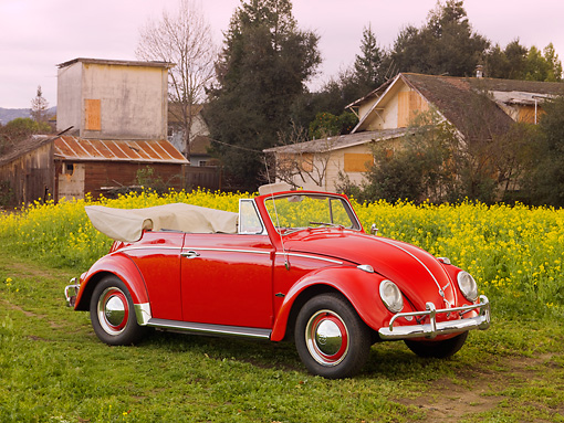 AUT 22 RK2784 01 © Kimball Stock 1962 Volkswagen Cabriolet Beetle Red 3/4 Front View By Field Of Yellow Wildflowers