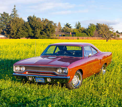 AUT 23 RK1758 01 © Kimball Stock 1970 Plymouth Hemi Road Runner Orange 3/4 Front View In Field Of Yellow Wildflowers