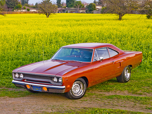 AUT 23 RK1760 01 © Kimball Stock 1970 Plymouth Hemi Road Runner Orange 3/4 Front View In Field Of Yellow Wildflowers