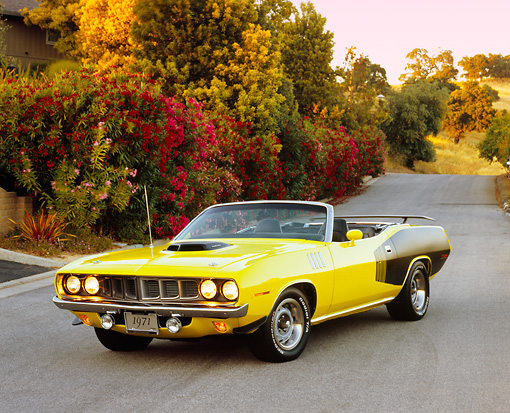 AUT 23 RK0951 01 © Kimball Stock 1971 Plymouth Hemi Cuda Convertible Yellow And Black 3/4 Front View On Pavement By Bushes