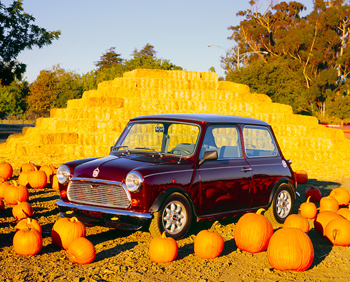 AUT 23 RK0987 05 © Kimball Stock 1972 Austin Mini Cooper Burgundy 3/4 Side View On Dirt By Pumpkins
