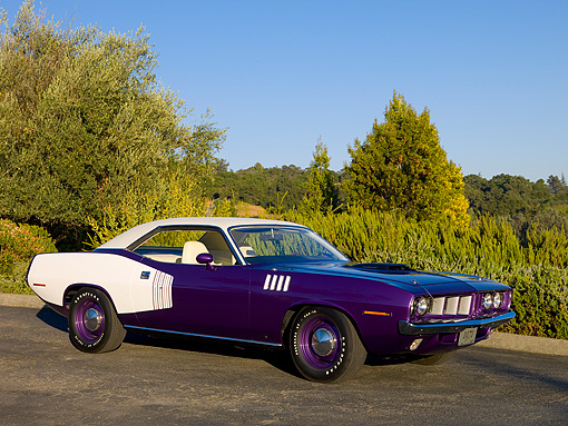 AUT 23 RK1082 01 © Kimball Stock 1971 Plymouth Hemi Barracuda Plum Crazy And White 3/4 Front View On Pavement By Trees