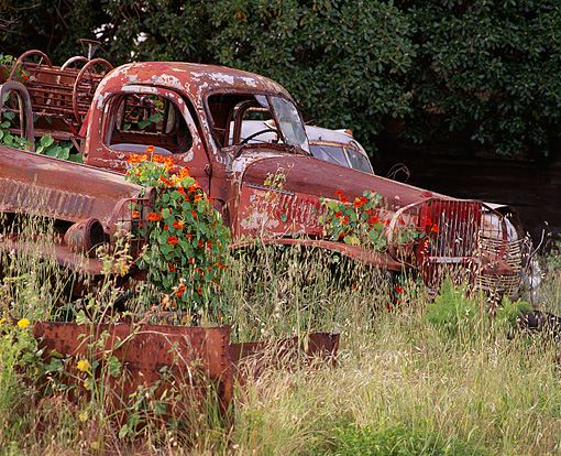 AUT 30 RK1460 03 © Kimball Stock Rusted Trucks In Junk Yard Tall Weeds