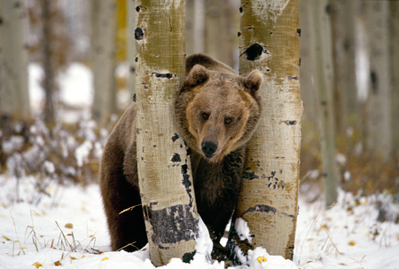 Image result for in between bear
