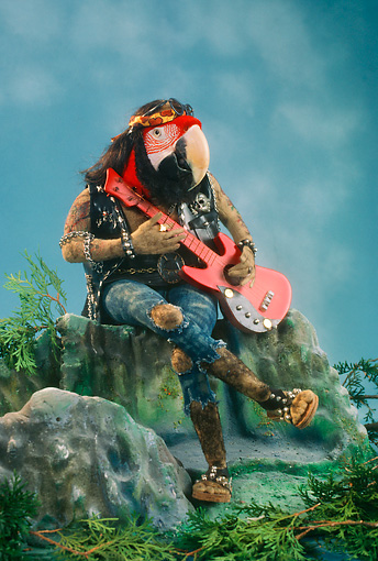 BRD 01 RC0001 01 © Kimball Stock Humorous Red Macaw Hippie Playing Guitar Sitting On Rock Studio