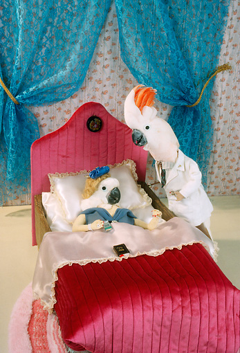 BRD 01 RC0019 01 © Kimball Stock Humorous Cockatoo Doctor Seeing Cockatoo Patient At Bedside Studio