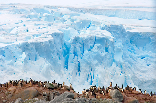 BRD 05 SK0084 01 © Kimball Stock Adelie Penguin Rookery By Sea Ice Antarctica