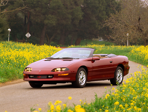 CAM 04 RK0001 16 © Kimball Stock 1995 Chevrolet Camaro Convertible Burgundy 3/4 Front View By Yellow Flower Field