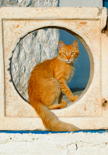 CAT 01 KH0012 01 © Kimball Stock Longhair Orange Tabby Greek Island Cat Sitting In Cement Hole