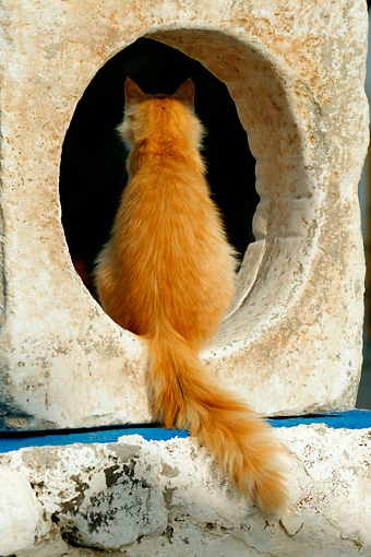 CAT 01 KH0014 01 © Kimball Stock Longhair Orange Tabby Greek Island Cat Sitting In Cement Hole Rear