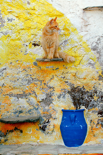 CAT 01 KH0015 01 © Kimball Stock Longhair Orange Tabby Greek Island Cat Sitting On Step In Cement Wall