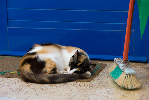 CAT 01 KH0025 01 © Kimball Stock Calico Greek Island Cat Sleeping By Door And Broom