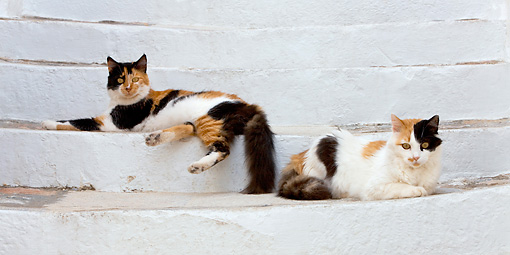 CAT 01 KH0027 01 © Kimball Stock Two Calico Greek Island Cats Laying On White Stairs