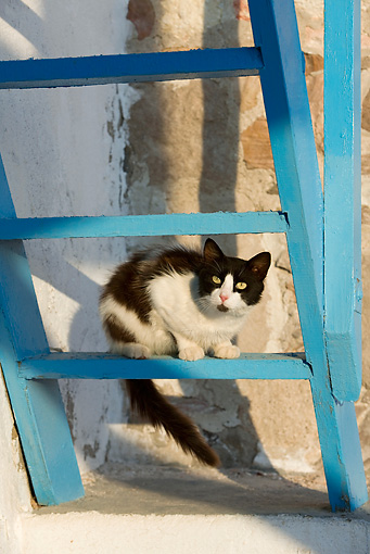 CAT 01 KH0029 01 © Kimball Stock Black And White Greek Island Cat Sitting On Blue Ladder
