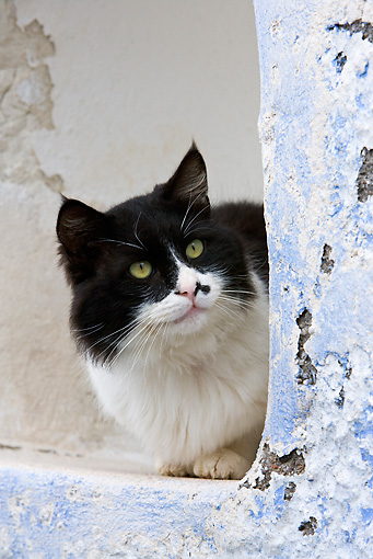 CAT 01 KH0031 01 © Kimball Stock Close-Up Of Black And White Greek Island Cat Sitting In Alcove