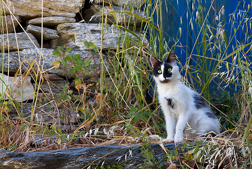 CAT 01 KH0035 01 © Kimball Stock Black And White Greek Island Cat Sitting On Stone In Tall Grass