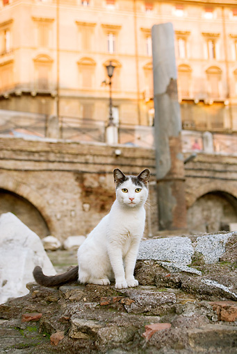 CAT 02 JE0126 01 © Kimball Stock White And Brown Alley Cat Sitting On Rocks Rome