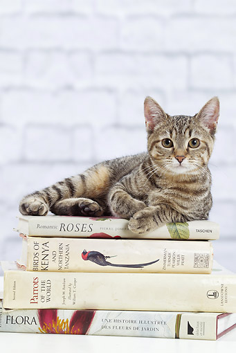 CAT 02 JE0393 01 © Kimball Stock Alley Cat Laying On Stack Of Books