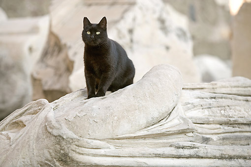 CAT 02 JE0418 01 © Kimball Stock Black Cat Standing On Statue In Rome, Italy