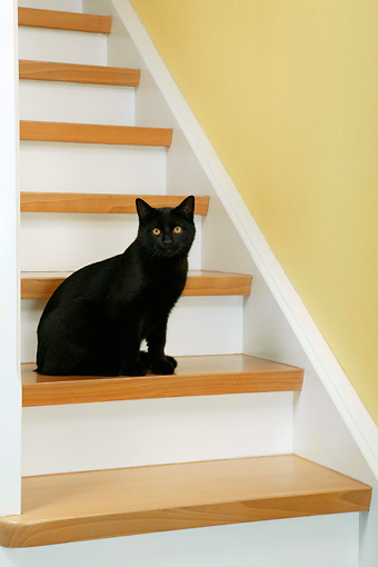 CAT 02 KH0057 01 © Kimball Stock Black Cat Sitting On Stairs