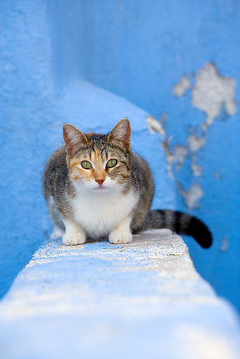 CAT 02 KH0137 01 © Kimball Stock Calico Tabby Greek Island Cat Sitting On Wall