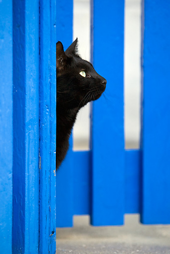 CAT 02 KH0305 01 © Kimball Stock Head Shot Of Black Cat Looking Out Of Blue Gate In Greek Islands