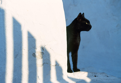 CAT 02 KH0328 01 © Kimball Stock Black Cat Standing On Stairs In Greece