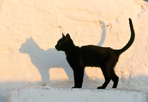 CAT 02 KH0329 01 © Kimball Stock Black Cat Standing On Stairs In Greece Profile
