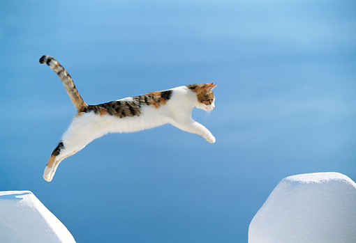 CAT 02 KH0330 01 © Kimball Stock Red Calico Tabby Greek Island Cat Jumping Over Gap In White Wall