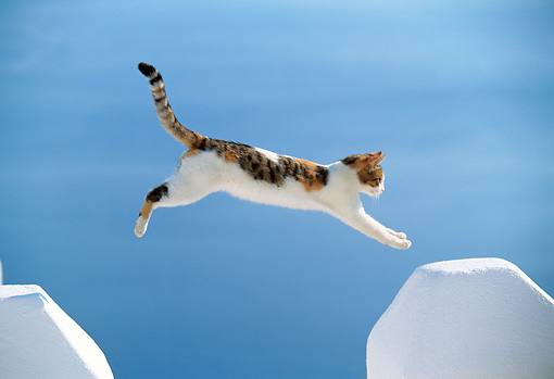 CAT 02 KH0331 01 © Kimball Stock Red Calico Tabby Greek Island Cat Jumping Over Gap In White Wall