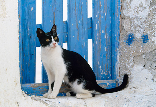 CAT 02 KH0337 01 © Kimball Stock Black And White Greek Island Cat Sitting By Blue Wooden Door