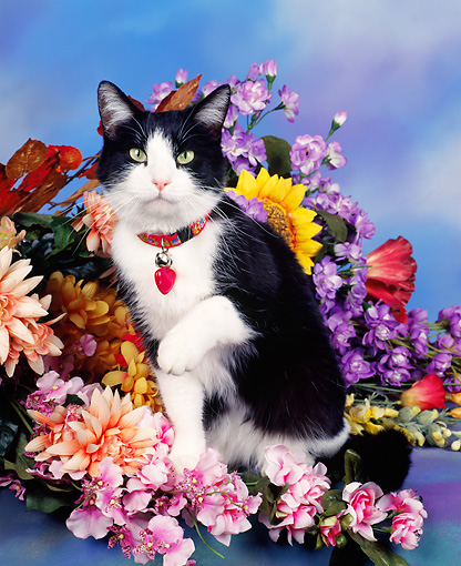 CAT 02 RK0243 03 © Kimball Stock Black And White Cat Sitting By Flowers Studio