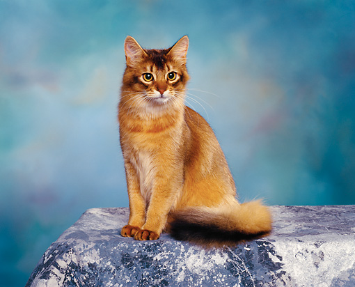 CAT 02 RK0437 05 © Kimball Stock Somali Ruddy Sitting Studio