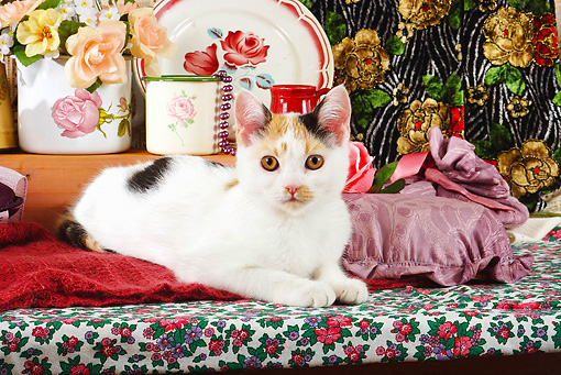 CAT 02 SJ0004 01 © Kimball Stock Calico Cat Laying On Bench By China And Roses