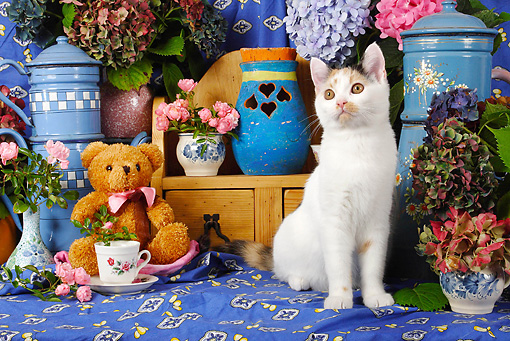 CAT 02 SJ0009 01 © Kimball Stock Calico Cat Sitting By Tea Set And Teddy Bear