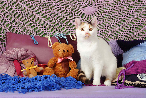 CAT 02 SJ0010 01 © Kimball Stock Calico Cat Sitting By Pillows And Teddy Bears