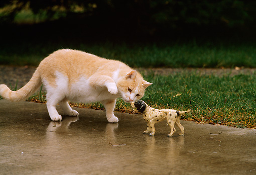 CAT 02 DB0001 01 © Kimball Stock Red Tabby Playing With English Setter Statue