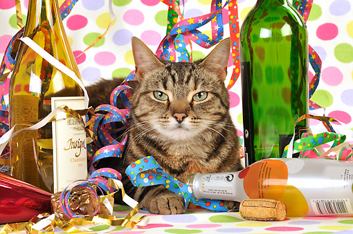 CAT 02 JD0011 01 © Kimball Stock Tabby Cat Laying By Streamers And Wine Bottles