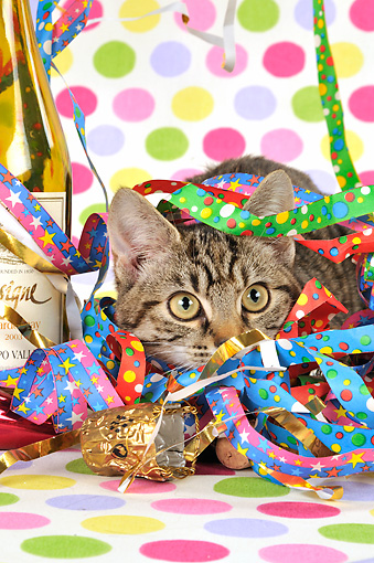 CAT 02 JD0012 01 © Kimball Stock Tabby Cat Hiding In Streamers By Wine Bottle