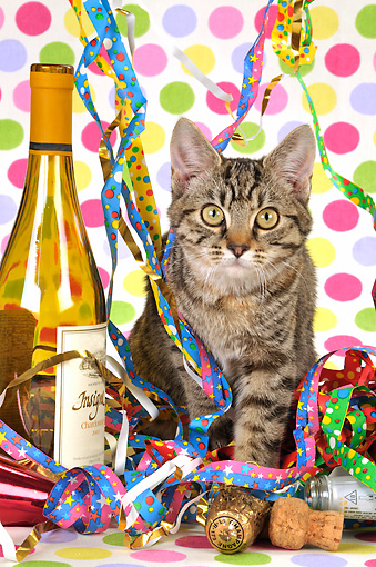 CAT 02 JD0013 01 © Kimball Stock Tabby Cat Sitting In Streamers By Wine Bottle