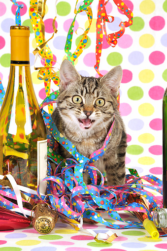 CAT 02 JD0014 01 © Kimball Stock Tabby Cat Sitting In Streamers By Wine Bottle