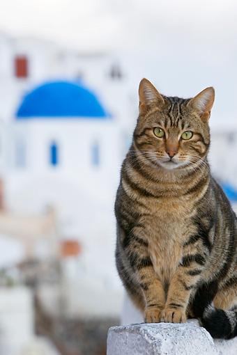 CAT 02 KH0124 01 © Kimball Stock Tabby Greek Island Cat Sitting On Wall City Background
