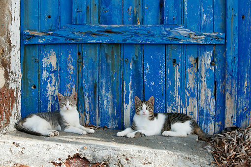 CAT 02 KH0130 01 © Kimball Stock Two Tabby And White Greek Island Cats Laying In Front Of Blue Wooden Door