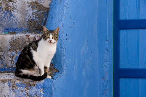 CAT 02 KH0131 01 © Kimball Stock Tabby And White Greek Island Cat Sitting On Blue Stairs